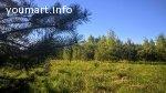 Уютный и живописный участок у хвойного леса